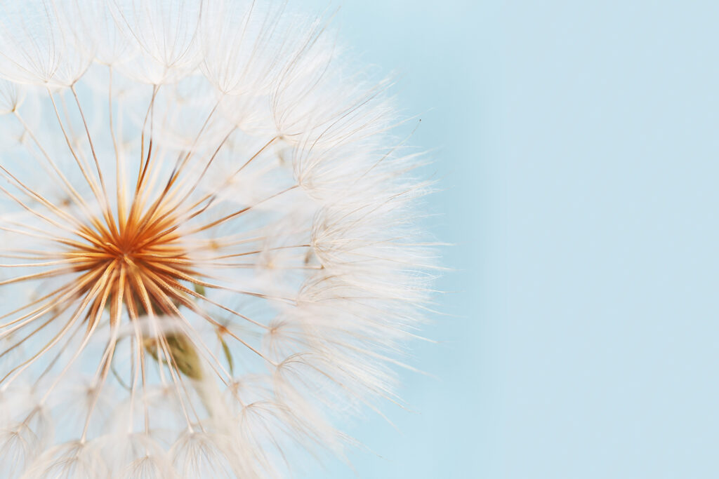 Allergies and your gut